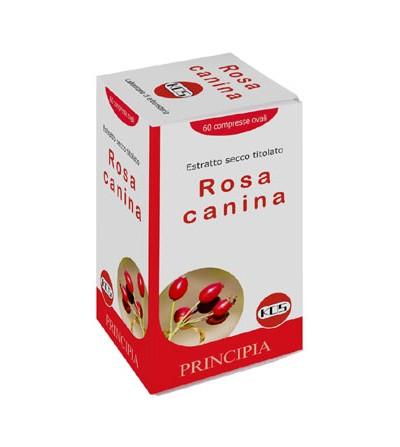 Rosa canina Kos