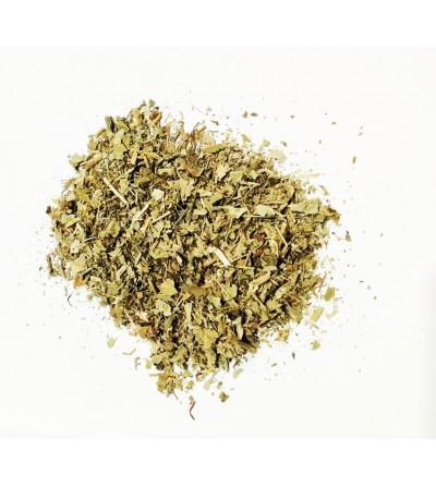 Alchemilla erba taglio tisana