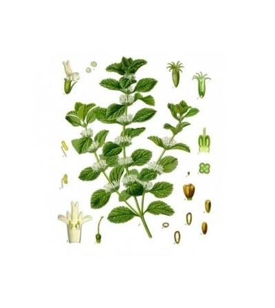 Migliarino sommità e foglie taglio tisana 500 g