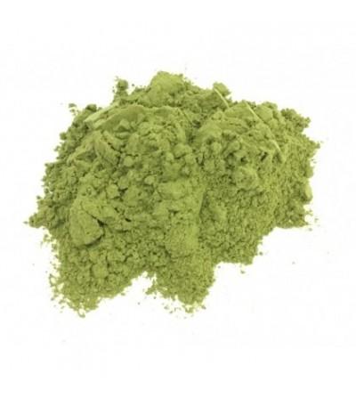 Equiseto erba polvere (Coda cavallina)