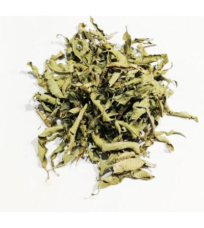 Verbena officinalis foglie taglio tisana