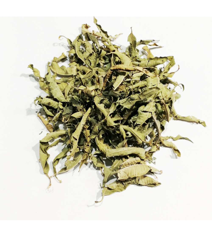 Verbena officinalis foglie