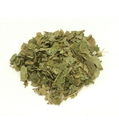 Mirtillo nero, Vaccinium myrtillus foglie taglio tisana