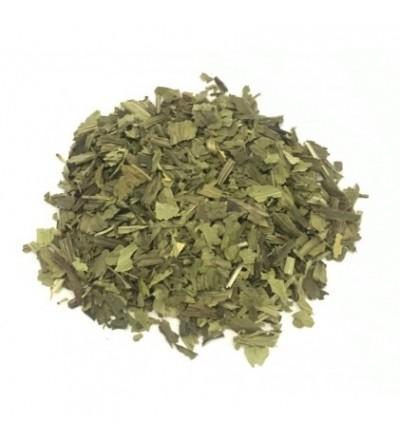 Piantaggine, Plantago lanceolata foglie taglio tisana