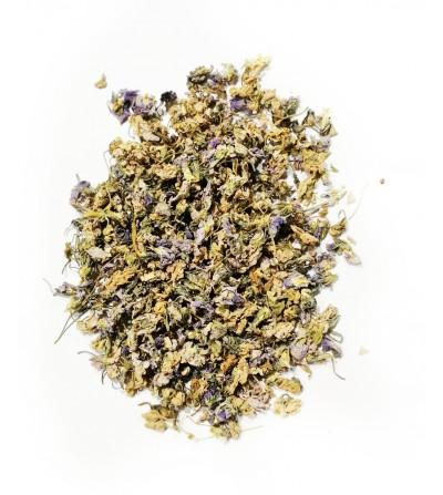 Viola odorata fiori taglio tisana