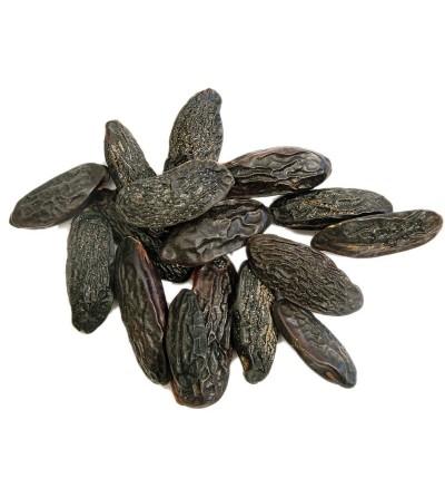 Fava tonka, Coumarouna odorata seme