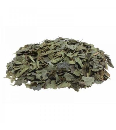 Boldo del Cile, Peumus boldus foglie taglio tisana