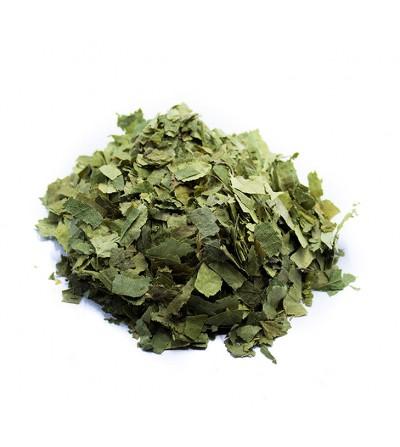 Betulla, Betula pendula foglie taglio tisana