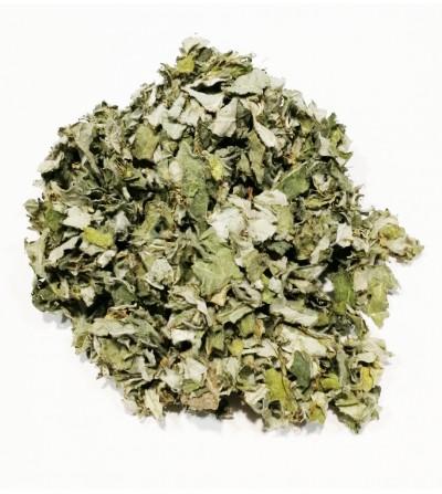 Carciofo, Cynara scolymus foglie taglio tisana