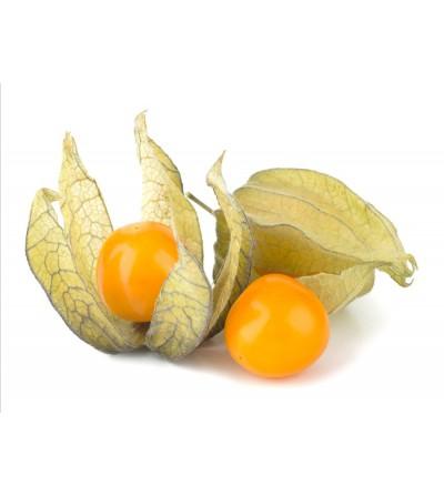 Alchechengi, Physalis peruviana frutti  500 g