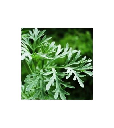 Assenzio romano, Artemisia absinthium erba con fiori taglio tisana 500 g