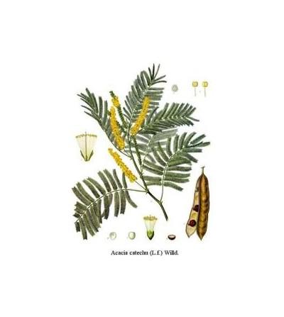 Catecù, Acacia catechu gommoresina intera (Terracattù) 500 g