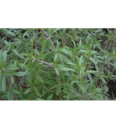 Cerea, Satureja montana foglie monde 500 g