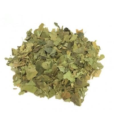 Edera arborea helix foglie taglio tisana 500 g