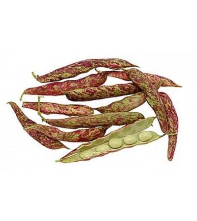 Fagiolo, Phaseolus vulgaris frutto (baccello) polvere 500 g