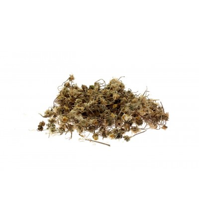 Margheritina, Bellis perennis fiori (Pratolina) 500 g
