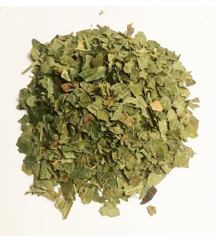 Ribes nigrum foglie taglio tisana