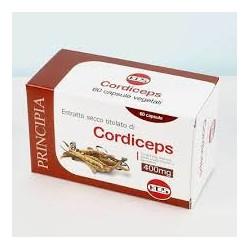 Cordiceps sinensis Kos