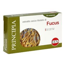 Fucus Kos