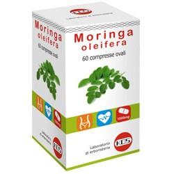 Moringa oleifera Kos