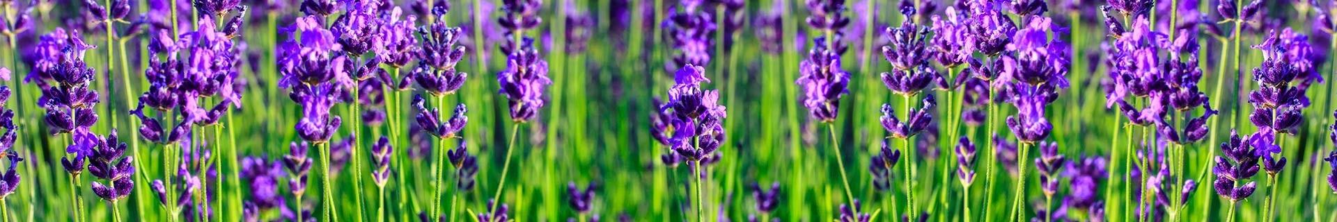 Erbe aromatiche ed officinali, un rimedio naturale